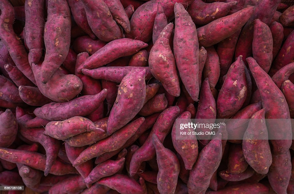 Lots of sweet potatoes in harvest season : ストックフォト