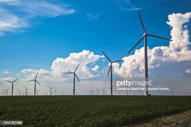 Lots of wind turbines in field against blue sky with clouds, Abilene, Texas, USA