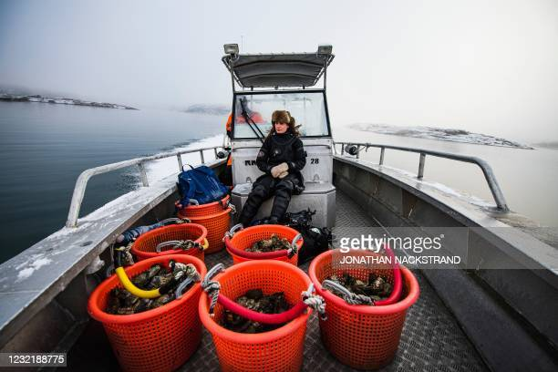 Lotta Klemming, a professional oyster diver, sits on a boat with the day's catch of oysters near her familys company in Grebbestad in Vastra Gotaland...