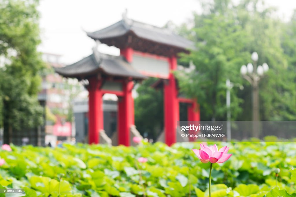 Lotus Flower And Leaves With A Red Traditional Chinese Gate In T