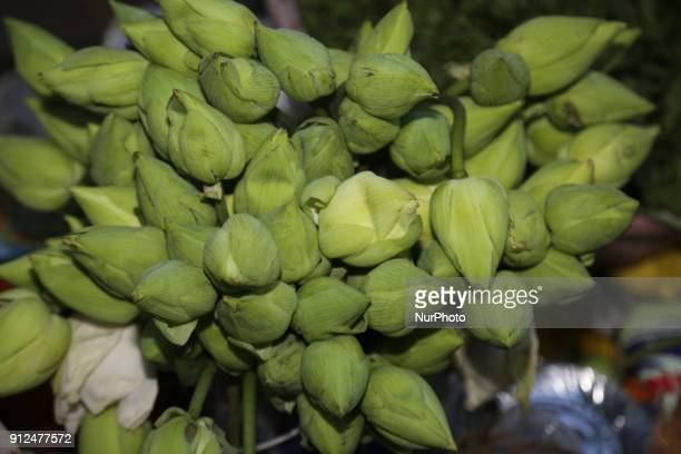 Lotus flower buds being sold at the Nataraja Temple complex in Chidambaram Tamil Nadu India The Chidambaram Nataraja temple or Thillai Nataraja...