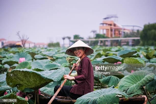 lotus flower harvesting - hanoi, vietnam - vietnamese cultuur stockfoto's en -beelden