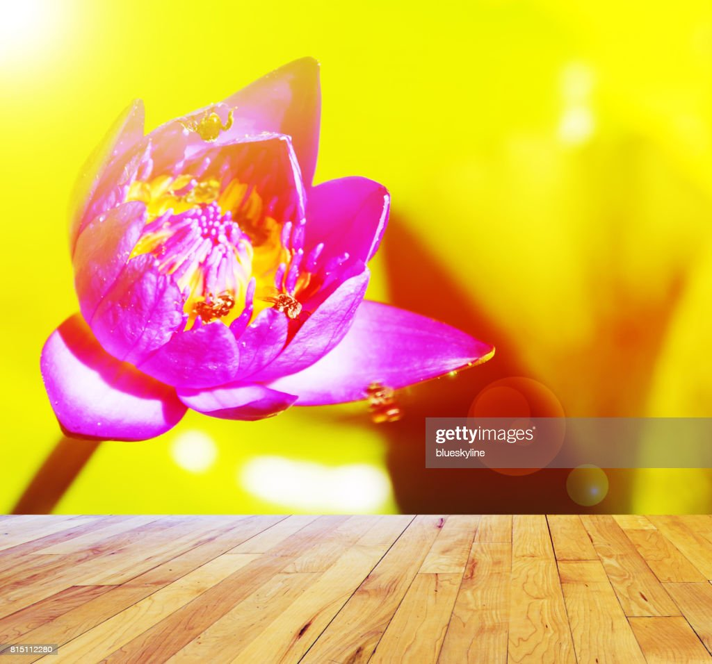 Lotus Flower In Pond With Wooden Floor Stock Photo Getty Images