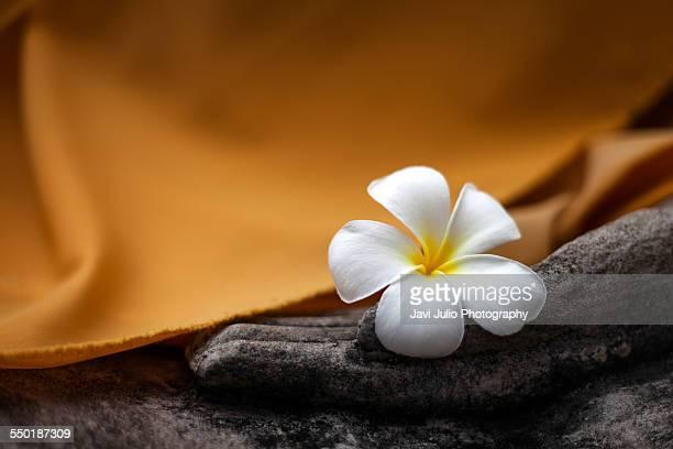 lotus flower - 仏陀 ストックフォトと画像
