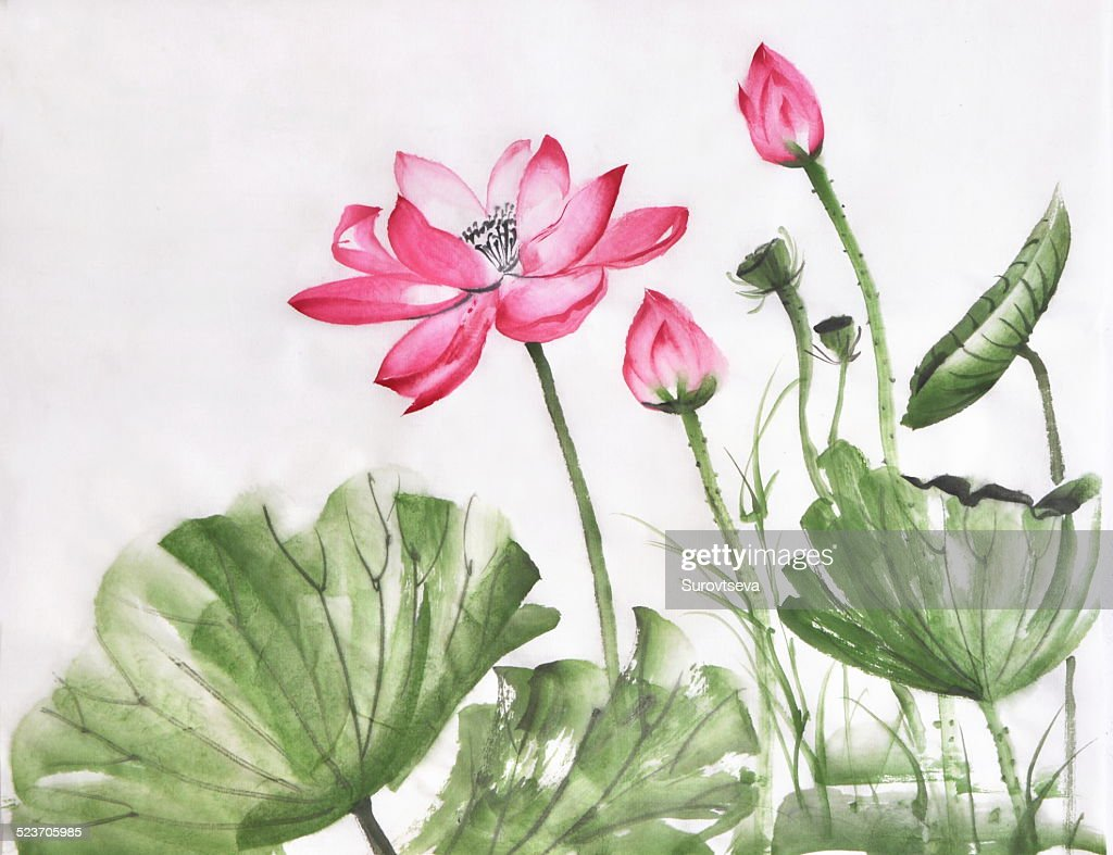 Lotus Flower Watercolor Painting Stock Photo Getty Images