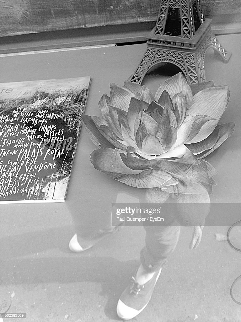 Lotus flower with replica of eiffel tower on glass table stock photo lotus flower with replica of eiffel tower on glass table stock photo izmirmasajfo Image collections