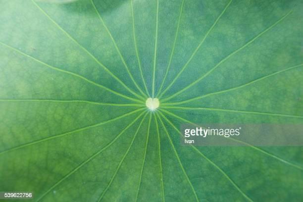 A Lotus Leaf with Love Symbol