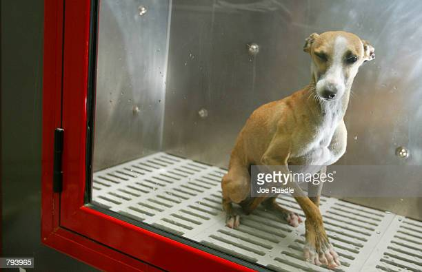 Lougy the dog sits in a new pet cleaning machine known as the PetSpa June 21 2002 in Miami Florida The sideloading converted washing machine features...