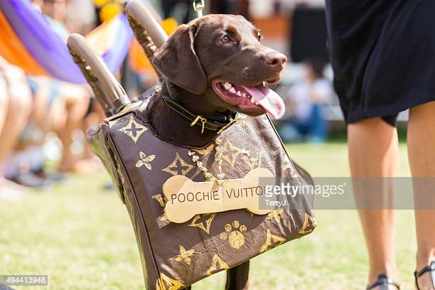 louie vuitton no it's poochie vuitton - louis vuitton purse stock pictures, royalty-free photos & images