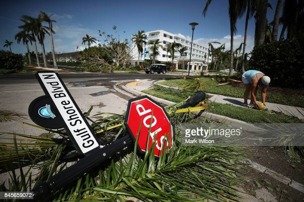 Louis Castro picks up a coconut downed by the winds of Hurricane Irma on September 11 2017 in Naples Florida Hurricane Irma made landfall in the...