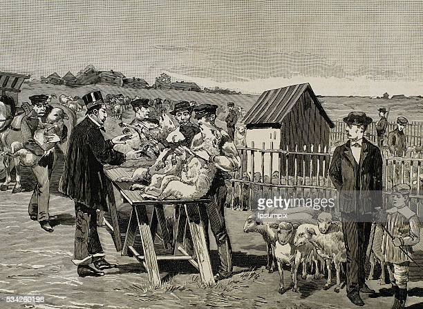 PASTEUR Louis French chemist and bacteriologist Vaccination of sheep against anthrax Agerville 1884 Engraving