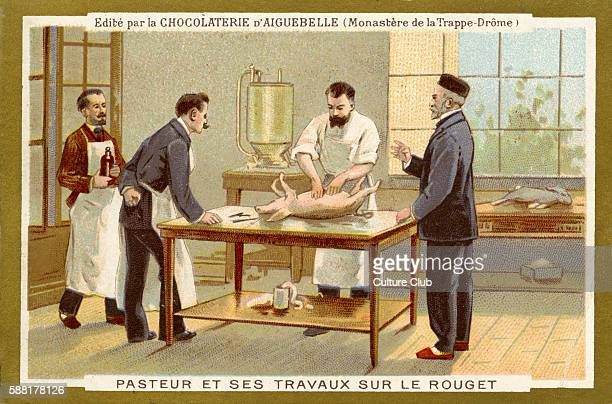 Louis Pasteur working to find a cure for swine fever / le rouget du porc he developed vaccinationfor it in 1883 Louis Pasteur French chemist and...
