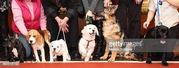Louis the French Bulldog Lager the Beagle Winter the Bulldog Teddy the Golden Retriever Elsa the German Shepherd and Lark the Labrador Retriever...
