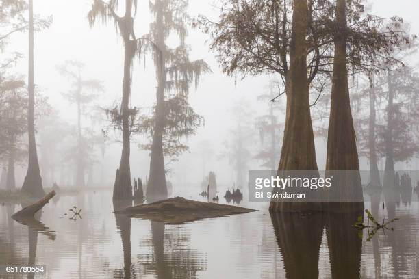 Louisiana bayou in fog