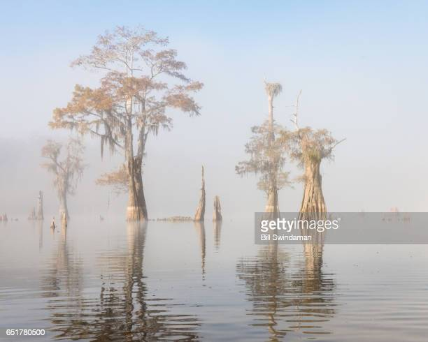 Louisiana bayou scene with cypress trees, and osprey nes