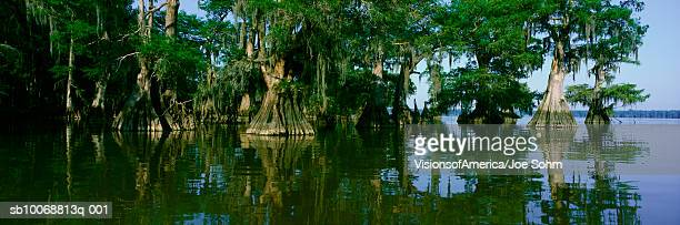 USA, Louisiana, Lake Fausse Pointe State Park, Cypress trees in water