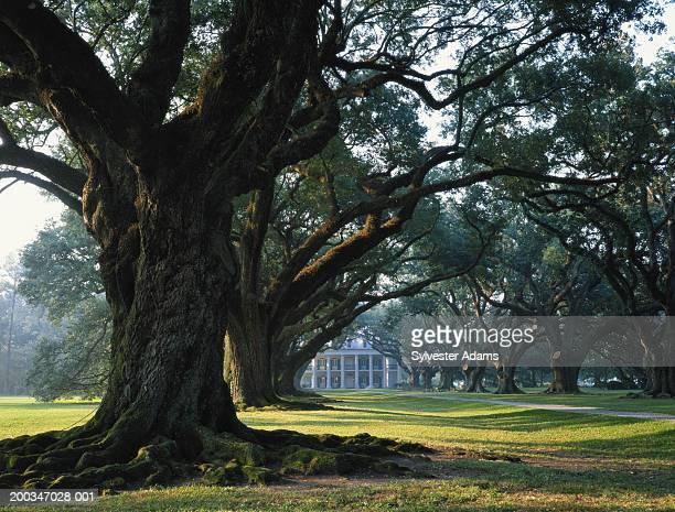 USA, Louisiana, large trees in front of plantation