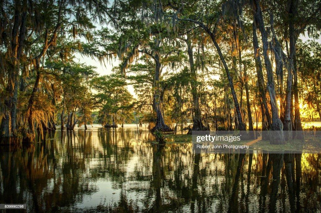 Louisiana Swamp : Stock Photo