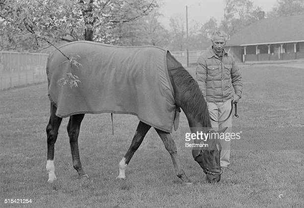 Alydar leading favorite for the Kentucky Derby munches on Blue Grass under the watchful eye of exercise rider Charlie Rose