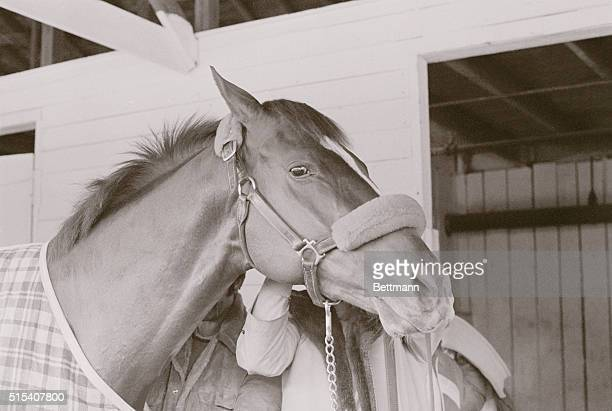 Favorites in the 104th running of the Kentucky Derby are pictured at Churchill Downs Alydar unbeaten this year won his last race at Kenneland April...