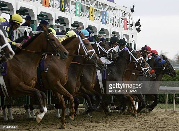The field breaks from the starting gate 04 November 2006 during the Breeders' Cup Distaff at Churchill Downs in Louisville Kentucky Round Pond won...