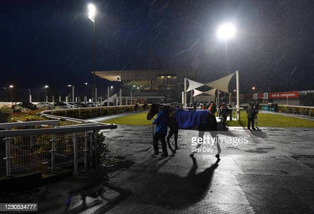 Louth , Ireland - 11 January 2021; A view of horses in the parade ring prior to the Follow Us On Twitter @DundalkStadium Maiden at Dundalk Stadium,...