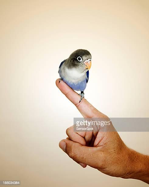Retrato de Pássaro de Amor