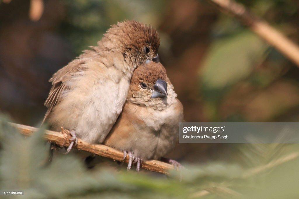 Love birds. : Stock Photo