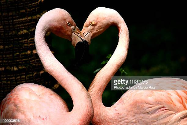 love by heart - flamingo heart stock pictures, royalty-free photos & images