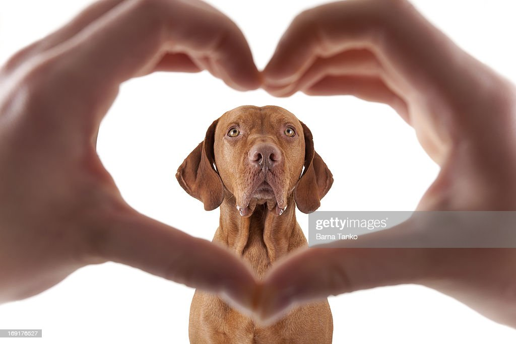 Love dogs : Stock Photo
