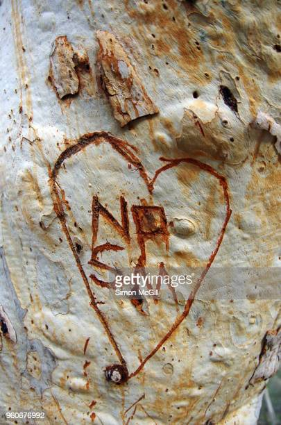 love heart and initials carved into a eucalyptus tree trunk - heart scar stock pictures, royalty-free photos & images