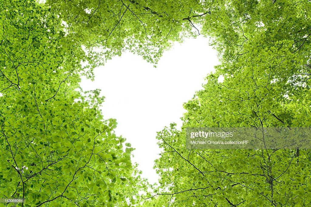 Love Heart in Tree Canopy : ストックフォト