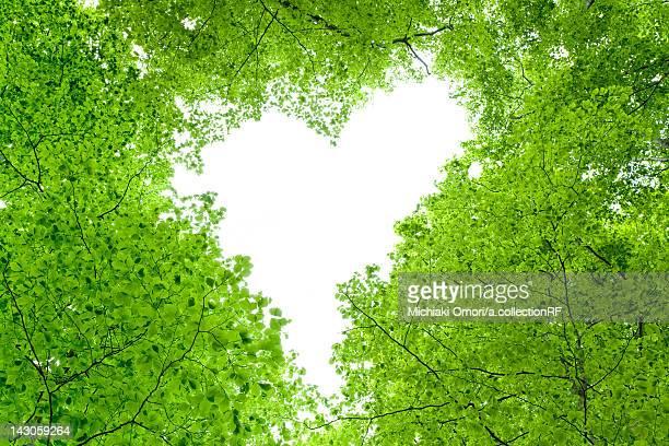 Love Heart in Tree Canopy