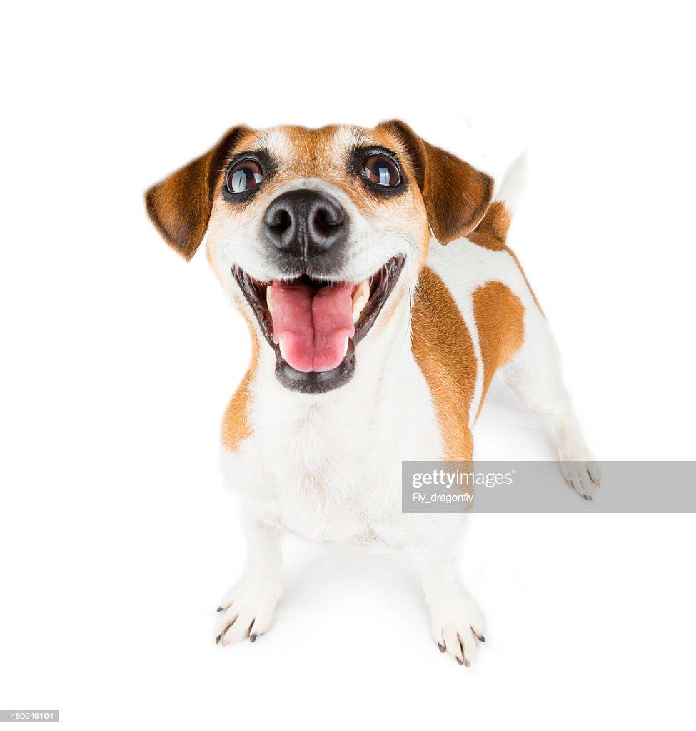 Perro amor vida : Foto de stock