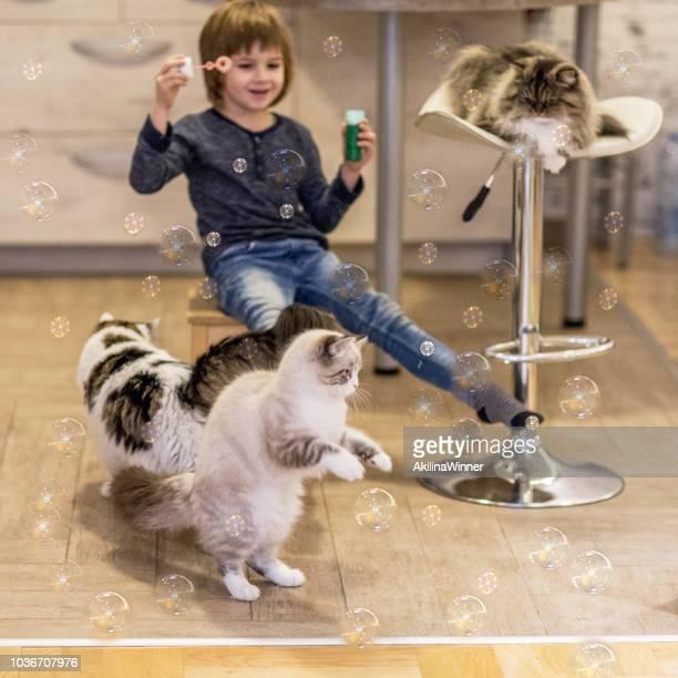 love my cats! - grande gruppo di animali foto e immagini stock