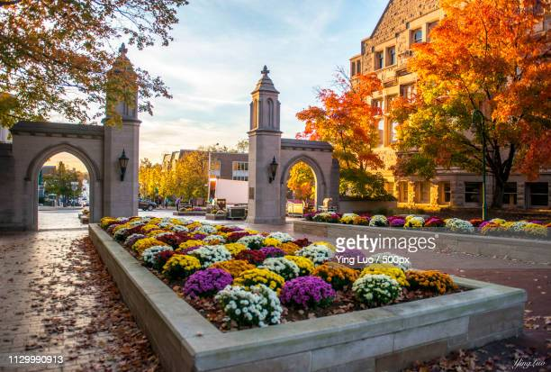 love my school, especially in fall - indiana university of bloomington - indiana stock pictures, royalty-free photos & images