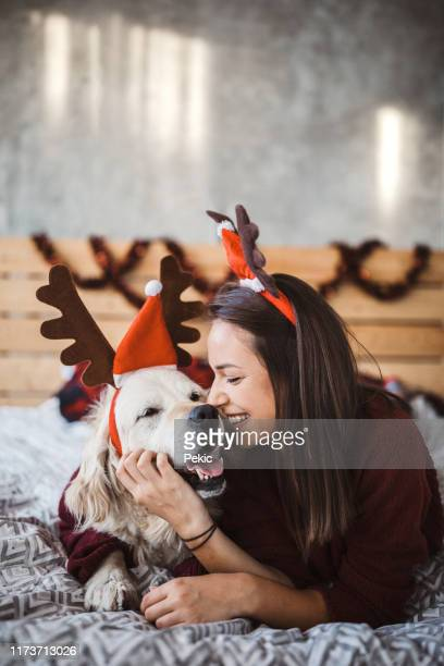 i love spending christmas with my four-legged friend - christmas dog stock pictures, royalty-free photos & images