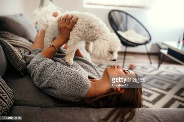 i love spending time with you - maltese dog stock pictures, royalty-free photos & images