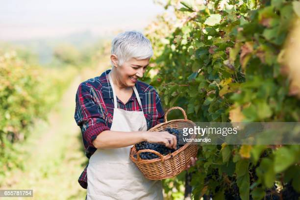 love to be woman entrepreneur - grape harvest stock pictures, royalty-free photos & images