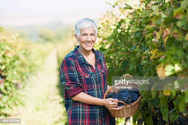 love to be woman entrepreneur - wine harvest stock pictures, royalty-free photos & images