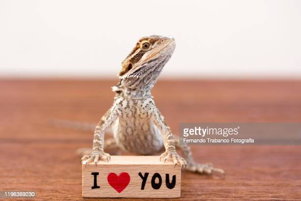 i love you - exotic pets stock pictures, royalty-free photos & images