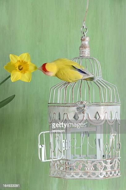 Lovebird and Daffodil