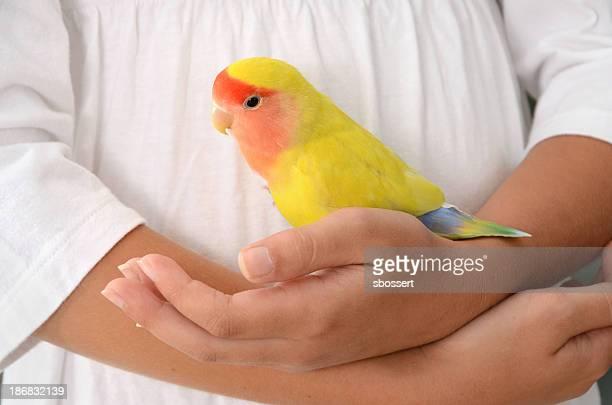 Lovebird na Mão