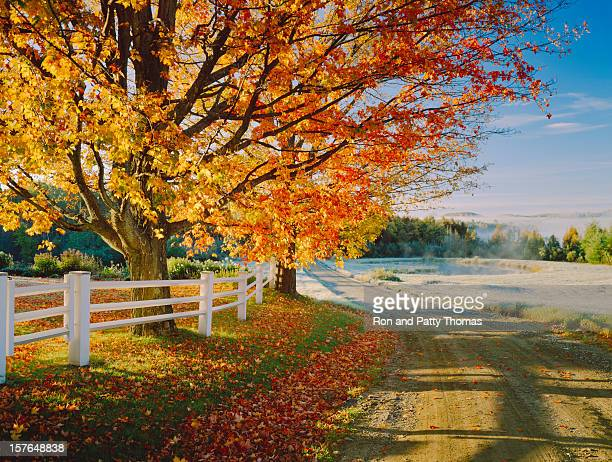 a lovely autumn foliage on a dirt road in vermont - maple tree stock pictures, royalty-free photos & images