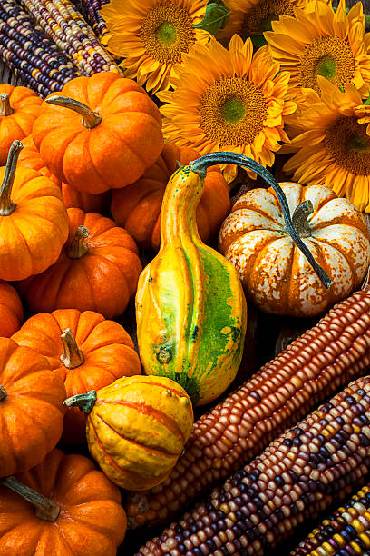 Lovely autumn fruit and sunflowers