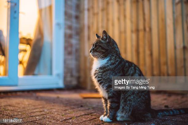 lovely cat sitting by the patio door in garden - whisker stock pictures, royalty-free photos & images