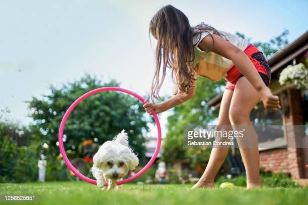 lovely caucasian girl training her white dog at home, because of quarantine crissi, cut maltese dog puppy - 服従訓練 ストックフォトと画像