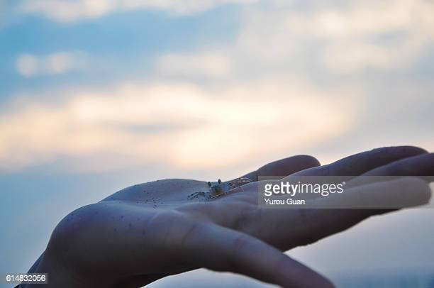 Lovely crab in girl' hand against the sunset,Maldives.