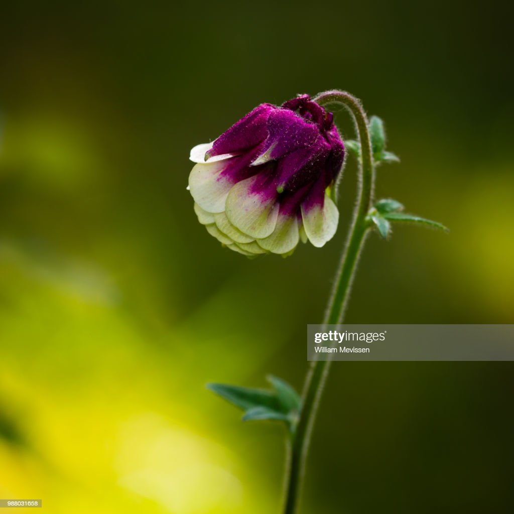 Lovely Flower : Stockfoto