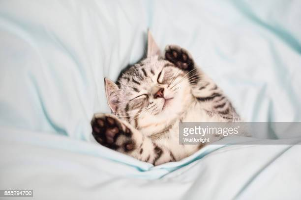lovely kitten on sleeping - schattig stockfoto's en -beelden